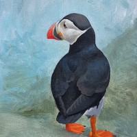 Puffin Study VII
